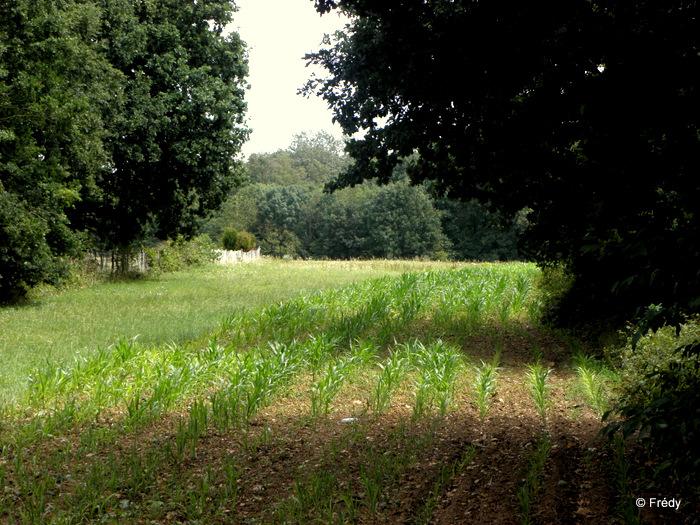 Saint Pierre de Bailleul 20110805_005