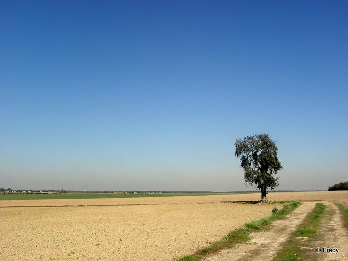 Garel, Le Plessis-Grohan 20110928_008