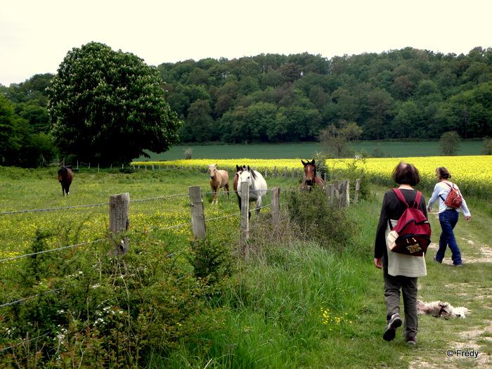 Champignolles 20120519_005
